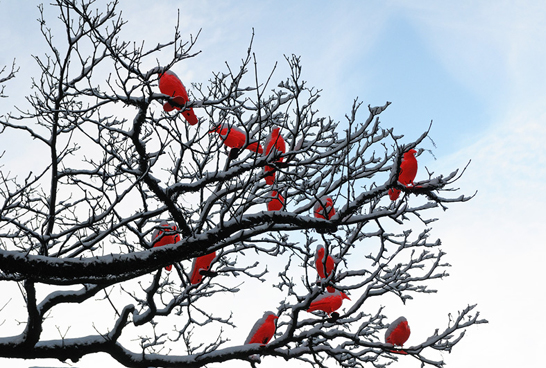 red-crows